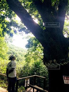 30代,自然,風景,森林,晴天,北海道,日差し,光,大木,新緑,パワースポット,旦那,フォトジェニック,旦那さん,色・表現,千本ナラ