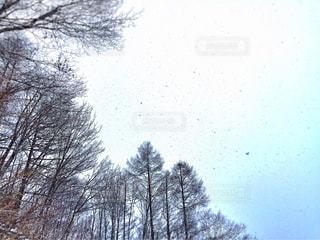空,雪,スノボ,ウィンタースポーツ