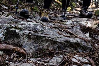 森の中の木の杭の写真・画像素材[1810106]