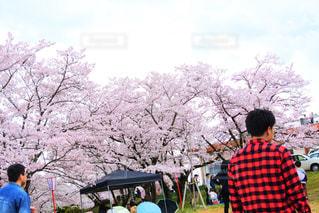 男性,1人,20代,花,春,桜,木,後ろ姿,男,樹木,お花見,人物,人,草木,桜の木,日中,さくら