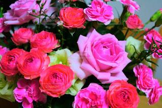 ピンクの花の写真・画像素材[1790767]
