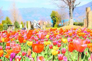 花の写真・画像素材[2053907]