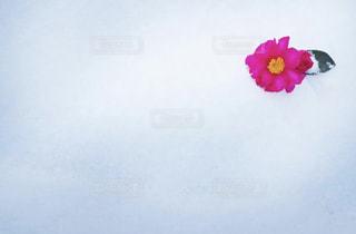 近くの花のアップの写真・画像素材[1732412]