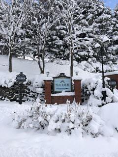 雪の美術館❄️の写真・画像素材[1791933]