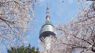 桜と南山タワーの写真・画像素材[2048561]
