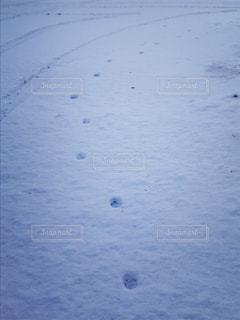 雪の朝の写真・画像素材[1757458]