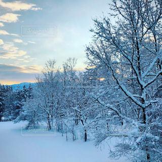 冬の朝の空の写真・画像素材[1733015]