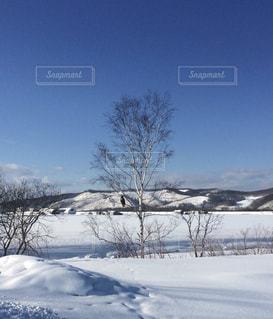 白樺と青空の写真・画像素材[1733974]