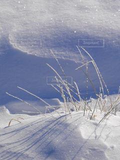 寒い朝 草木に霜の華が咲くの写真・画像素材[1733975]
