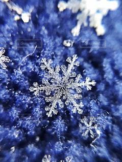 雪の結晶の写真・画像素材[1734372]
