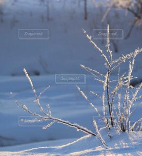 寒い朝、霜の華咲くの写真・画像素材[1739051]