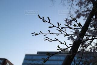 木の上に座っている鳥の写真・画像素材[1716143]