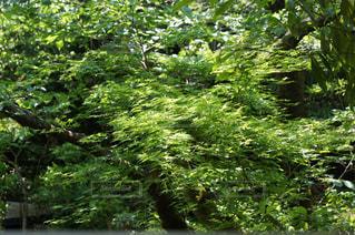 森の中の緑の植物の写真・画像素材[1164527]