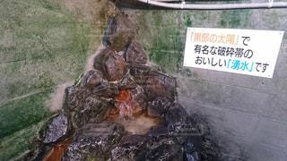 黒部の湧水の写真・画像素材[1411683]