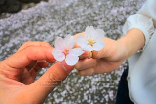 花,春,桜,ピンク,お花,お花見,ブロッサム,blossom