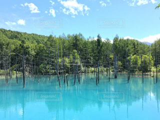 北海道の青池の写真・画像素材[1045708]
