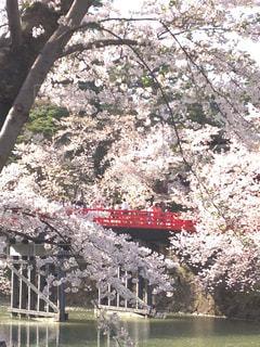 弘前城の桜の写真・画像素材[1045710]