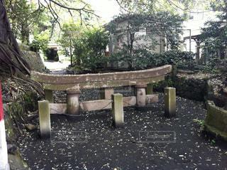 桜島の鳥居の写真・画像素材[1045762]