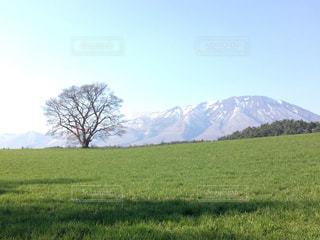背景の山に大規模なグリーン フィールドの写真・画像素材[1107160]