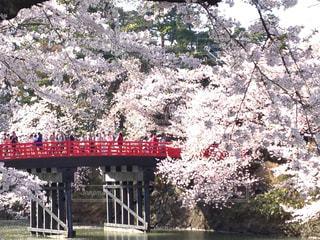 弘前城の桜祭りの写真・画像素材[1124656]