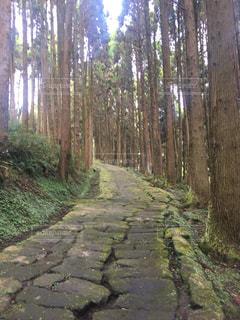 龍門司坂の写真・画像素材[1689333]