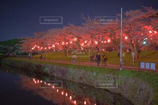 函館の花見の写真・画像素材[1868800]