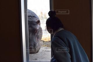 後ろ姿,人物,動物園,覗き見,旭山動物園,カバ,うしろすがた,動物園デート