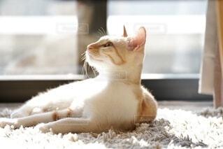 窓の前に座っている猫の写真・画像素材[3954412]