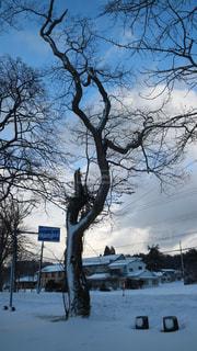 雪に覆われた木の写真・画像素材[1735193]