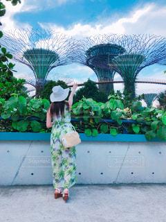 建物,植物,景色,旅行,シンガポール,アトラクション,海外旅行,植物園,ガーデンズ・バイ・ザ・ベイ,スーパーツリー,巨体