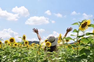 女性,ひまわり,帽子,黄色,向日葵,ひまわり畑,色,兵庫県,きいろ,yellow,佐用町,7月,8月