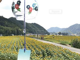 空,夏,植物,ひまわり,綺麗,黄色,向日葵,風鈴,幸せ,ひまわり畑,色,兵庫県,きいろ,yellow,佐用町