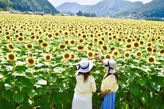 空,夏,植物,ひまわり,綺麗,帽子,黄色,女子,向日葵,人物,幸せ,ひまわり畑,色,兵庫県,きいろ,yellow,佐用町