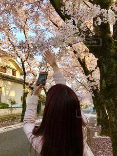 木の隣に立っている人の写真・画像素材[1840471]