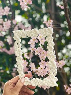 フレームの中の桜の写真・画像素材[1857742]