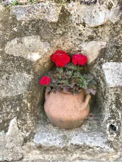 赤い花の写真・画像素材[1945799]