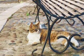 猫,海外,茶色,ベンチ,景色,ねこ,広場,イタリア,ベージュ,石畳み,ミルクティー色