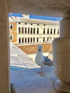 風景,建物,鳥,海外,晴天,茶色,景色,カモメ,ベネチア,生き物,ベージュ,色・表現,ミルクティー色