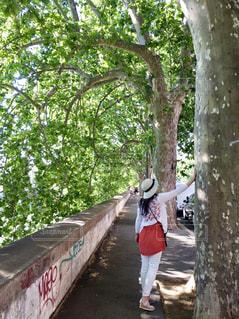 女性,風景,木,植物,後ろ姿,帽子,後姿,歩道,後姿フォト