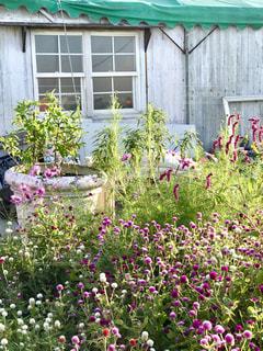 建物の前にある色とりどりの花の庭の写真・画像素材[2141127]