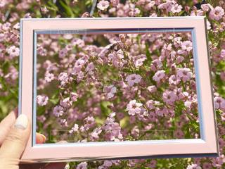 ピンクの花の写真・画像素材[2141158]
