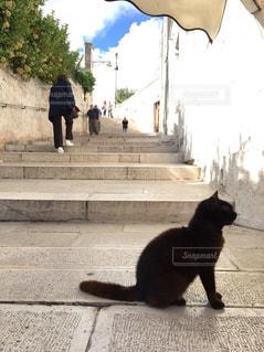 階段にいる猫の写真・画像素材[2148392]