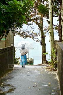 雨の並木道の写真・画像素材[2166559]