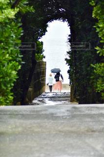 雨のフクギ並木道の写真・画像素材[2172185]