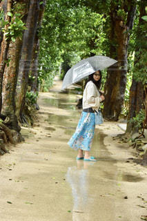 雨のフクギ並木道の写真・画像素材[2211709]