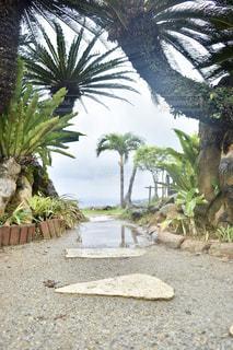 雨上がりの水溜りの写真・画像素材[2213716]