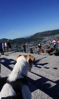 犬,風景,空,動物,屋外,晴天,青,散歩,山,景色,影,山頂,レジャー,お散歩,ライフスタイル,おでかけ,眺め