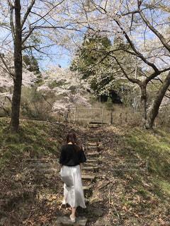 女性,風景,空,桜,屋外,植物,階段,散歩,山,景色,草,山頂,レジャー,お散歩,ライフスタイル,おでかけ,さくら