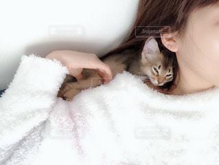 肩の上でくつろぐ猫の写真・画像素材[2292073]