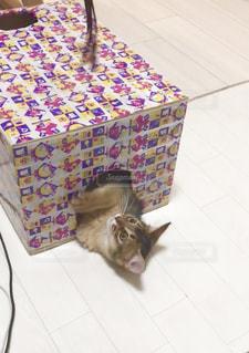 遊ぶ猫の写真・画像素材[2292123]